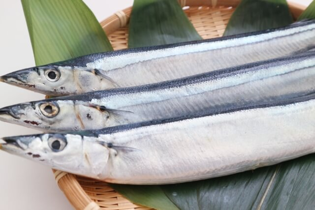 DHA豊富な青魚